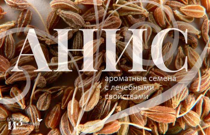 Анис – ароматные семена с лечебными свойствами