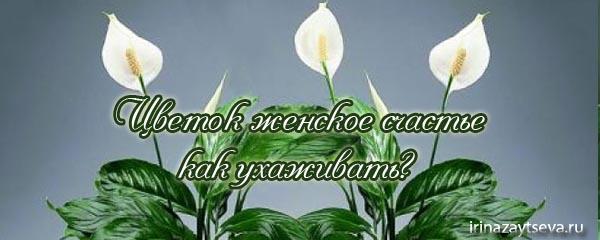 цветок женское счастье фото: