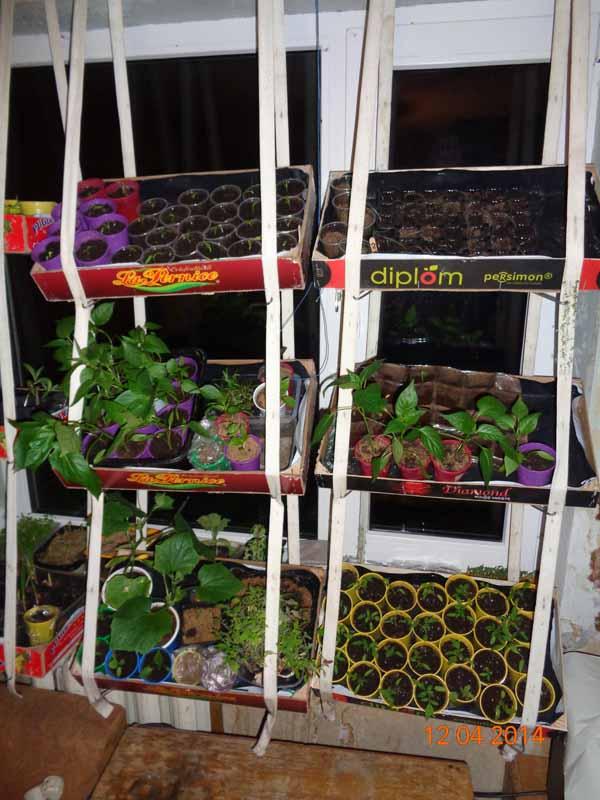 Овощи на балконе своими руками 634