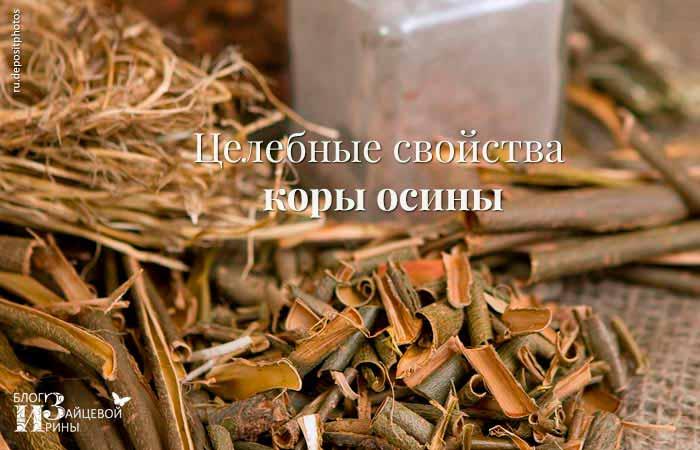 Целебные свойства коры осины