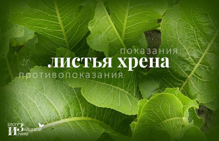 Листья хрена. Полезные свойства и противопоказания