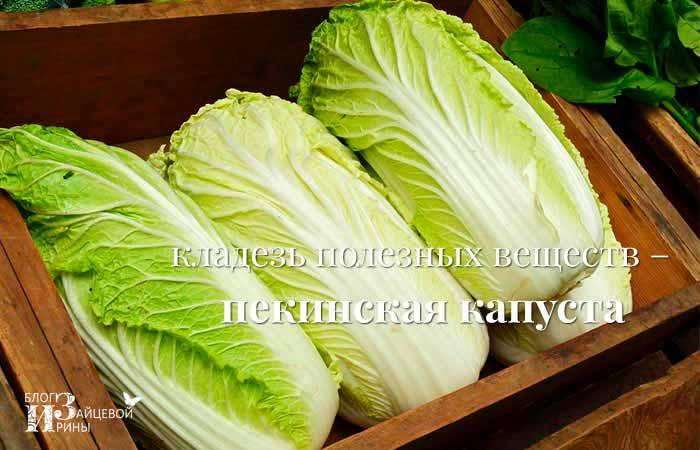 Кладезь полезных веществ – пекинская капуста