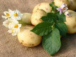 картофельный сок от простатита