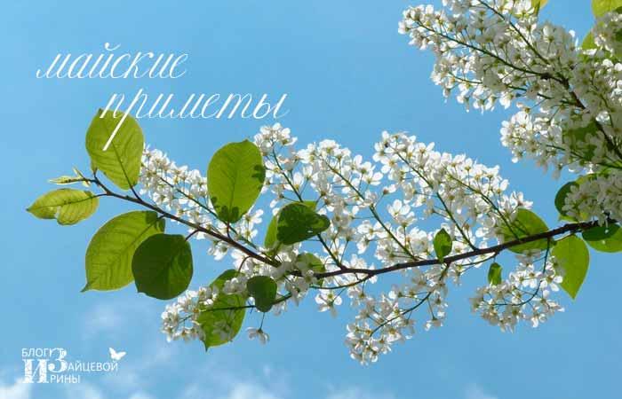 приметы про весну