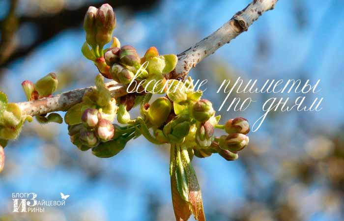 народные приметы какая будет весна