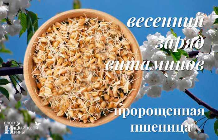 Пророщенная пшеница. Рецепты.
