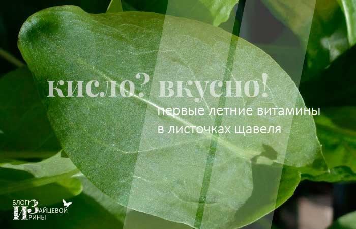 Первые летние витамины в листочках щавеля