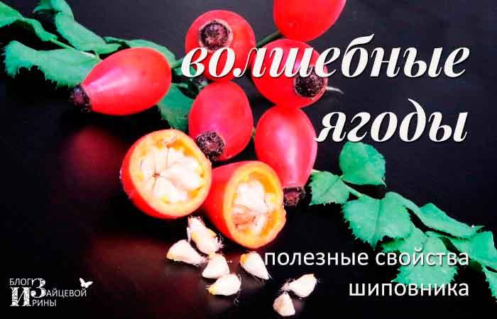 http://irinazaytseva.ru/Pic/shipovnik-02.jpg