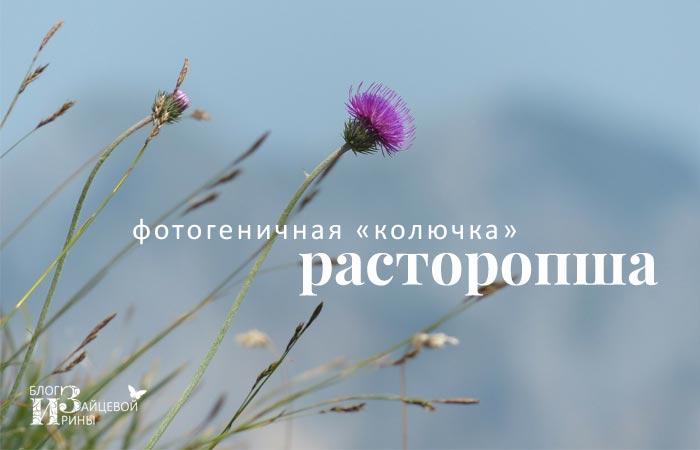 Фотогеничная «колючка» расторопша