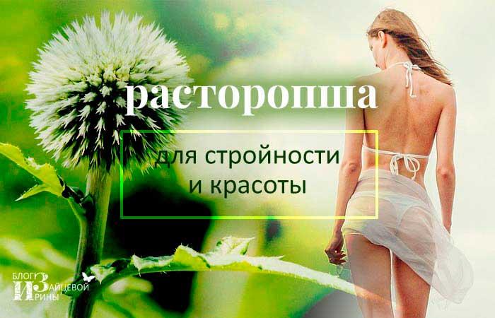 Полезные и лечебные свойства расторопши