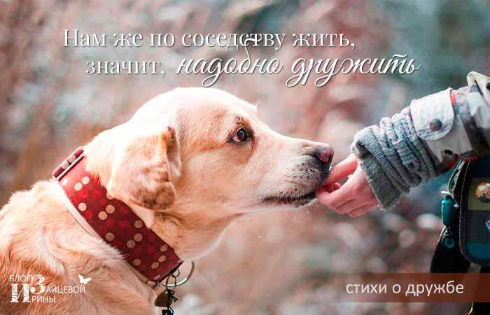 стихи о дружбе и любви
