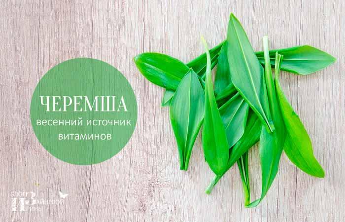 Черемша – весенний источник витаминов