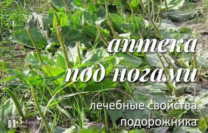 Инструкция травы подорожника