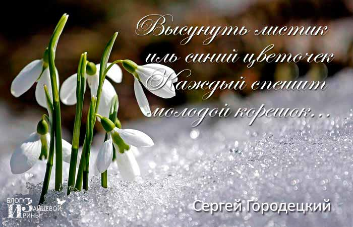 фраза дня весна красота