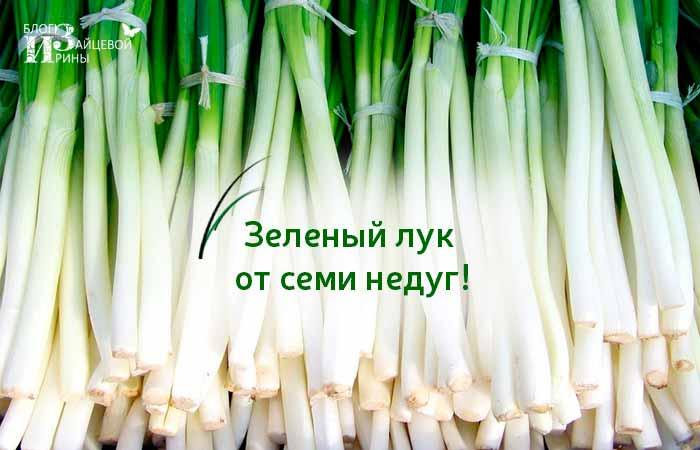 Зеленый лук от семи недуг