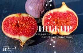 Инжир – сладкий плод с лечебными свойствам