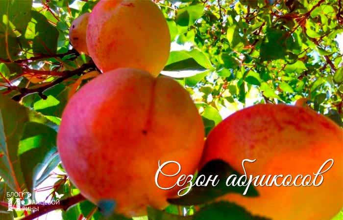 варенье из абрикосов дольками фото 1