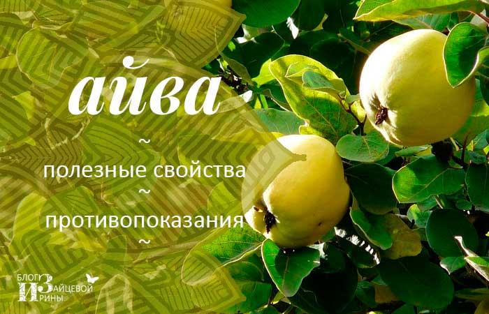 /solnechnaya-ajva-i-ee-poleznye-svojstva.html