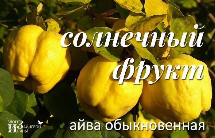 /ajva.html