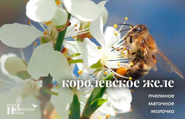 /pchelinoe-matochnoe-molochko-korolevskoe-zhele.html
