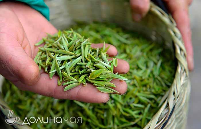 Фотография белого китайского чая