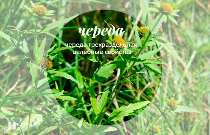 /chereda.html