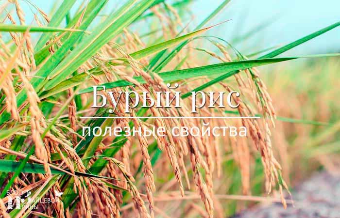 Отличия бурого риса от белого