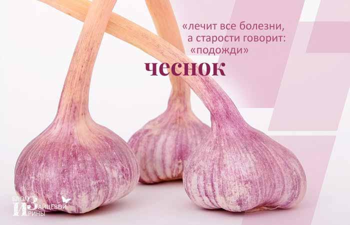 /chesnok.html