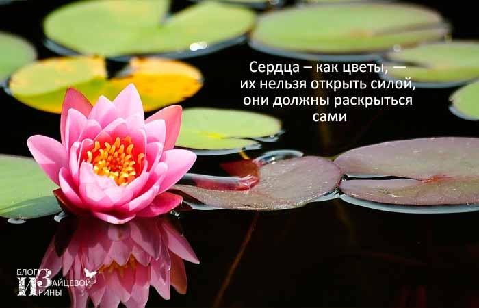 красивые цитаты про цветы