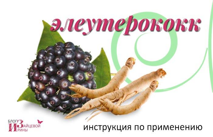 Элеутерококк: полезные свойства и противопоказания для женщин. Элеутерококк: лечебные свойства и противопоказания для мужчин