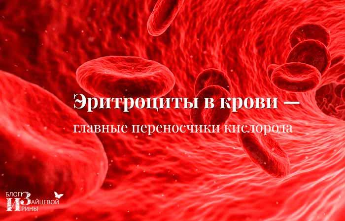 Эритроциты в крови