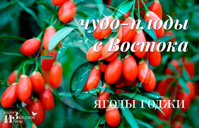 ягоды годжи сушеные плоды