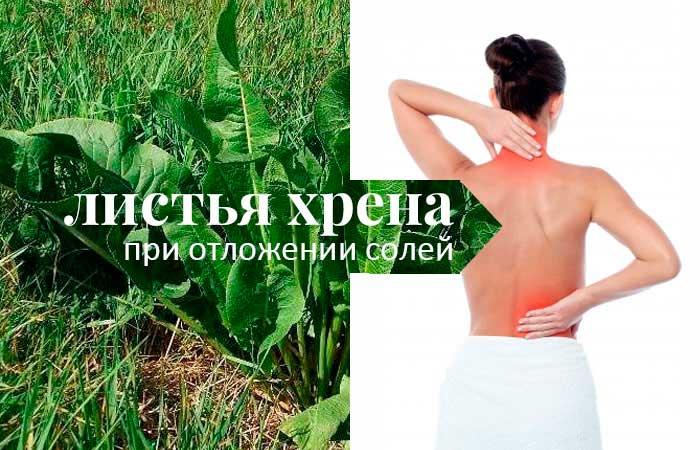 Использование листьев хрена для лечения болезней суставов