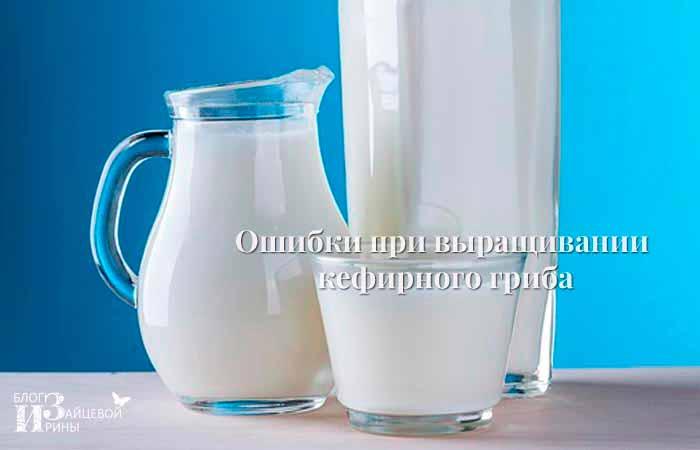 Ошибки при выращивании молочного гриба