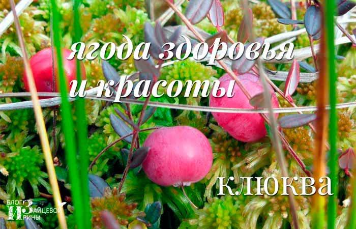 /klyukva-poleznye-i-lechebnye-svojstva-protivopokazaniya.html
