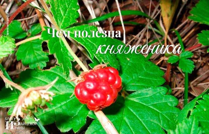 /knyazhenika.html