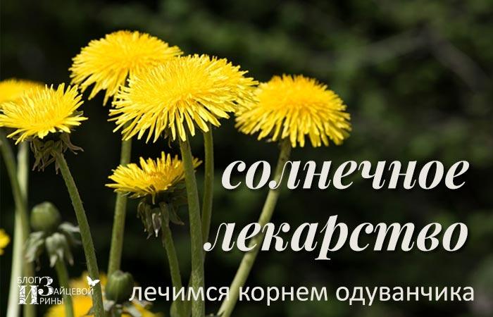/koren-oduvanchika-lechebnye-svojstva-protivopokazaniya.html