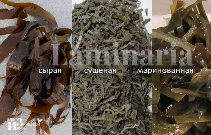виды морской капусты