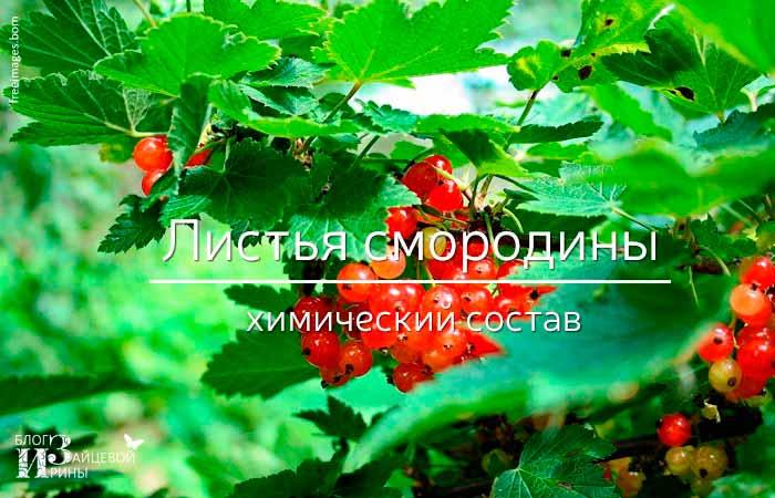 состав листьев смородины