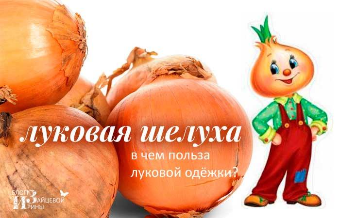 /lukovaya-sheluxa.html