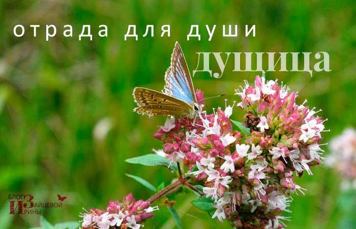 /otrada-dlya-dushi-dushica.html