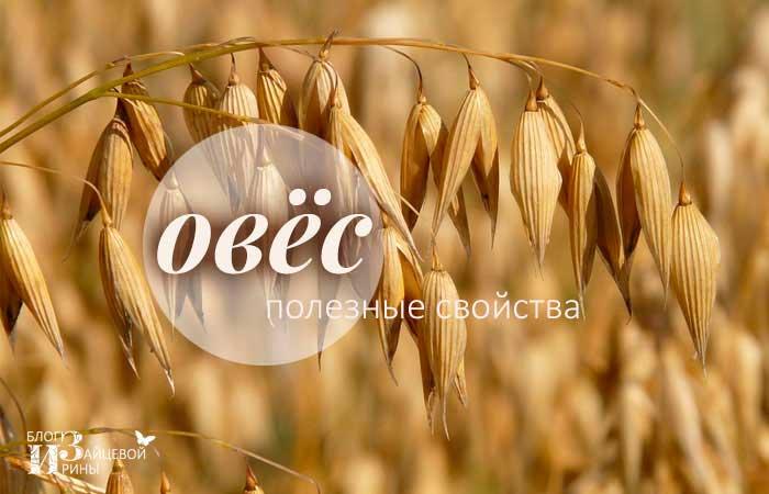 Овес. Полезные свойства. Применение. Лечение отваром овса | Блог ...