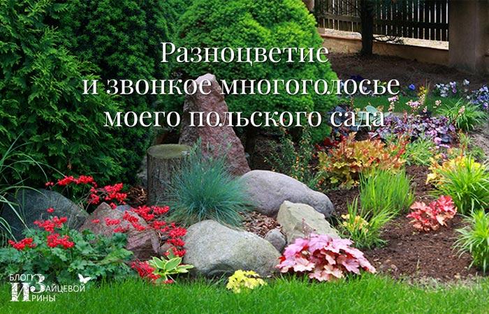 /raznocvetie-i-zvonkoe-mnogogolose-moego-polskogo-sada.html