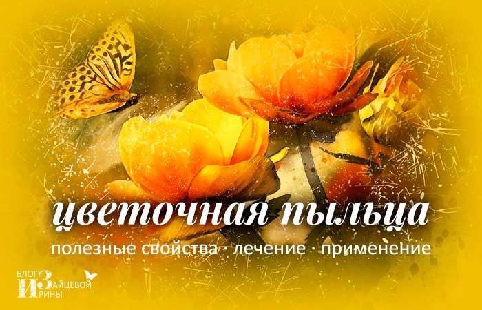 /cvetochnaya-pylca-poleznye-svojstva-lechenie-primenenie.html