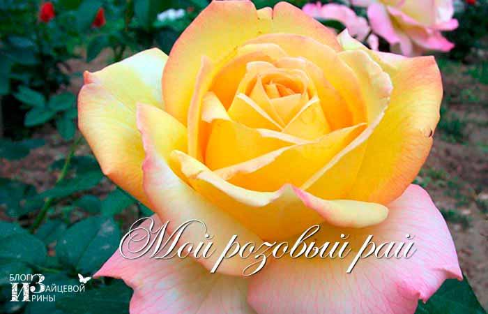 Мой розовый рай