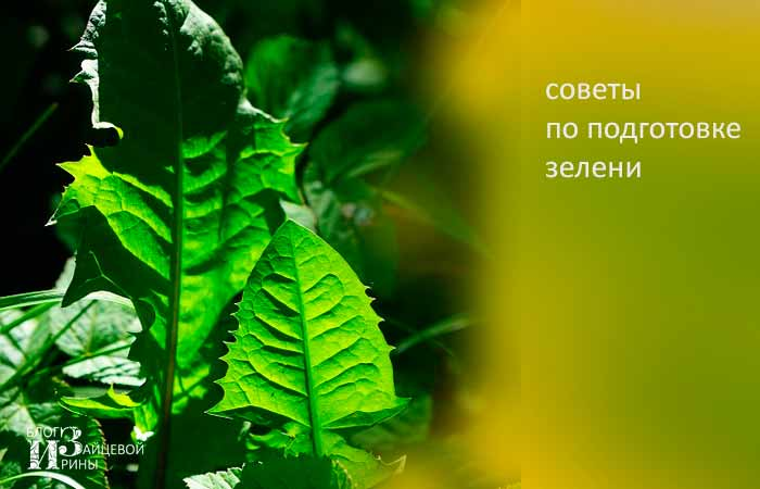 Советы по подготовке зелени
