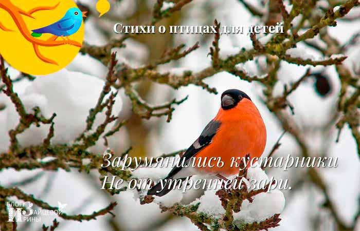 стихи про птиц