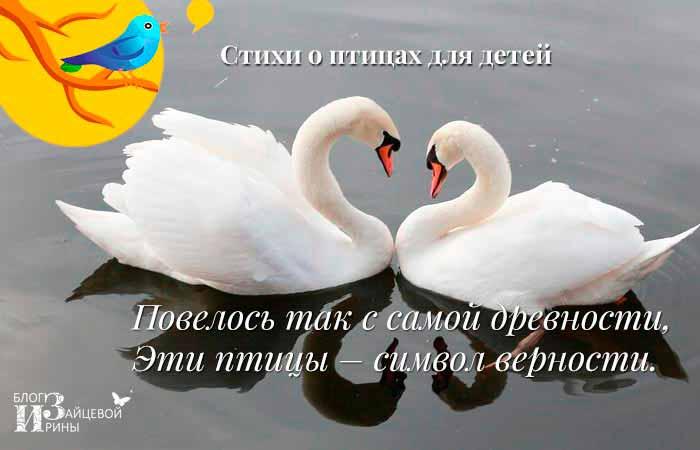 стихи про птиц короткие красивые