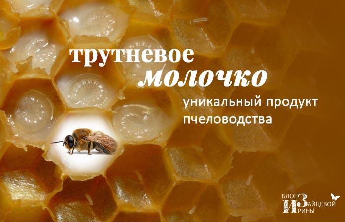 /trutnevoe-molochko-unikalnyj-produkt-pchelovodstva.html