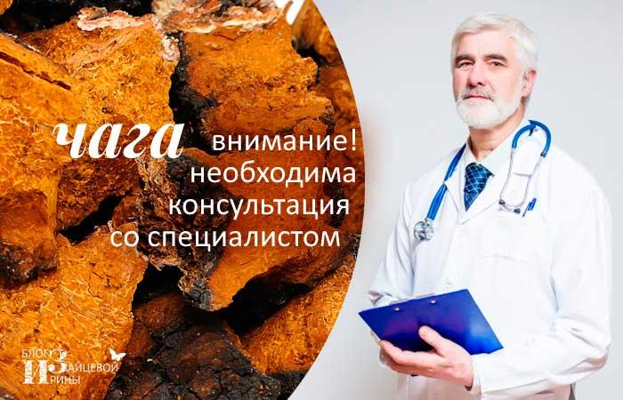 Березовый гриб чага- полезные свойства и применение чаги